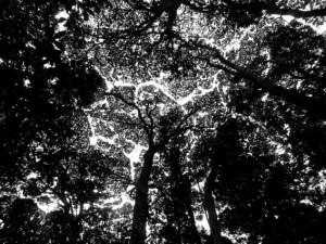 Tree Art by Ingrid
